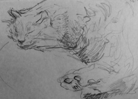 Sleeping Cat (pencil on A4 paper) 2013