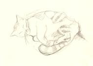 Harry (A4 pencil sketch) 2011