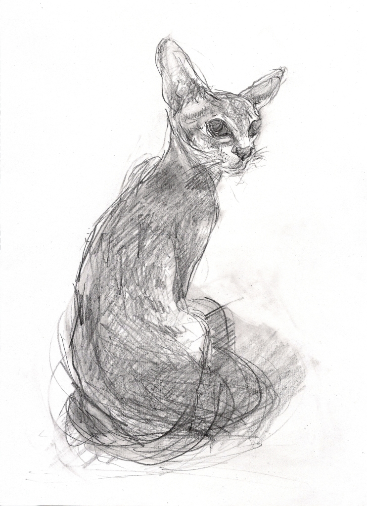 Oriental Cat (A4 pencil on paper) 2014
