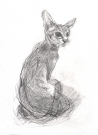 Oriental Cat (A4 pencil on paper) 2014